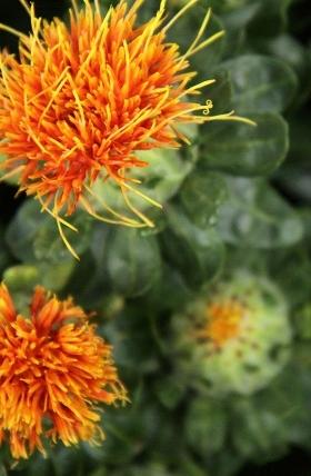 Plant-based Ceramides